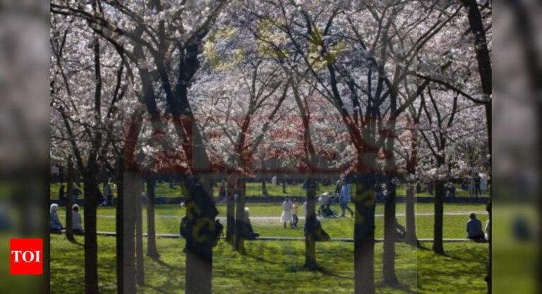 Japan's famous cherry blossoms bloom early amid warming