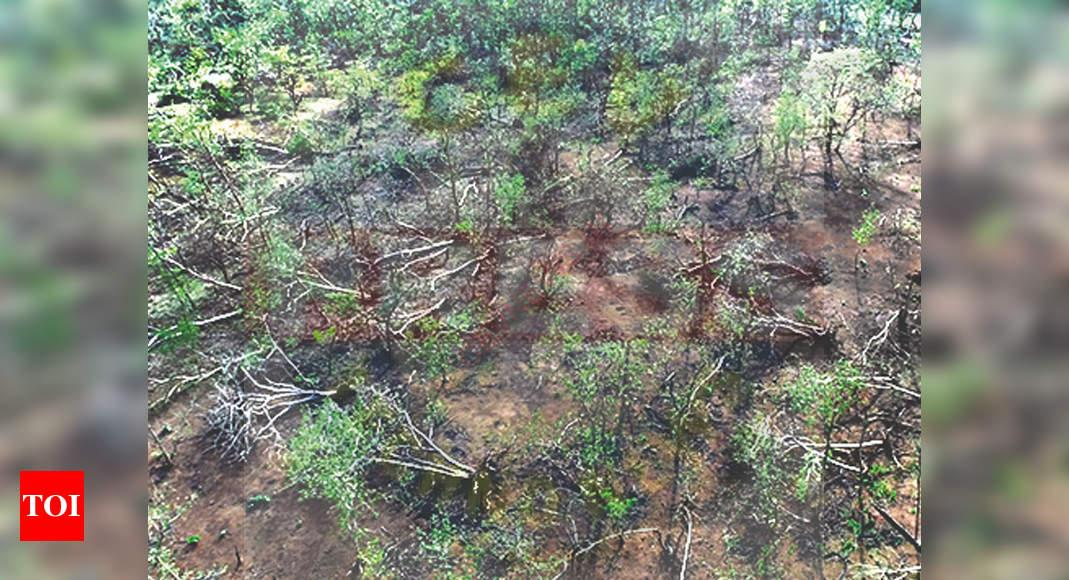 Gujarat: Mega clean-up op to remove 30-40 lakh fallen trees in Gir forest   Ahmedabad News