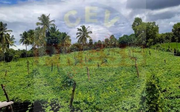 Read more about the article In Kerala's Palakkad, farmers launch 'Support A Farmer', an initiative to recoup business