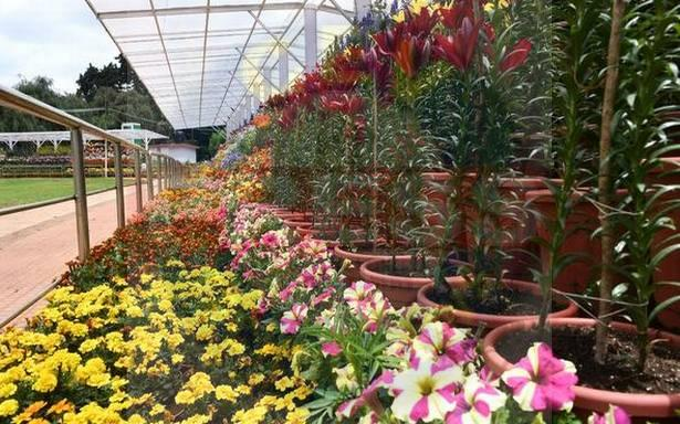Read more about the article You can enjoy the 2021 virtual Ooty flower show from anywhere in the world