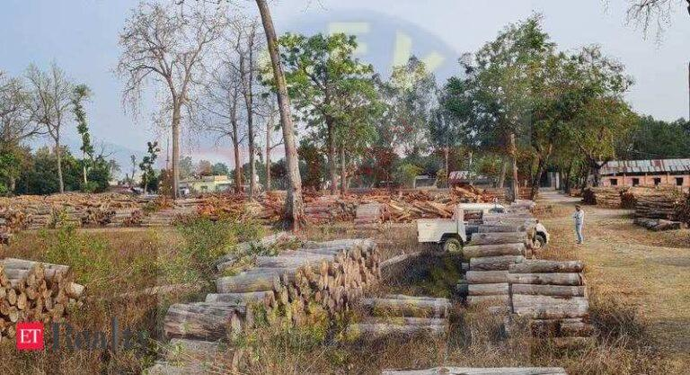 Increasing prices of timber may impact real estate industry, Real Estate News, ET RealEstate